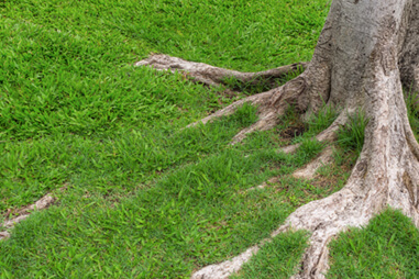 Are Exposed Tree Roots a Bad Thing? Get to the Root